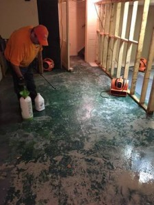 Mold Removal Raleigh Technician